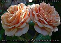My love for Roses (Wall Calendar 2019 DIN A4 Landscape) - Produktdetailbild 1
