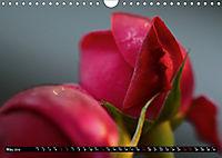 My love for Roses (Wall Calendar 2019 DIN A4 Landscape) - Produktdetailbild 5