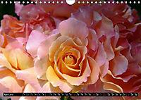 My love for Roses (Wall Calendar 2019 DIN A4 Landscape) - Produktdetailbild 4