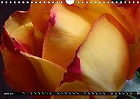 My love for Roses (Wall Calendar 2019 DIN A4 Landscape) - Produktdetailbild 6