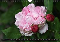 My love for Roses (Wall Calendar 2019 DIN A4 Landscape) - Produktdetailbild 10