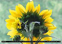 My love for sunflowers (Wall Calendar 2019 DIN A3 Landscape) - Produktdetailbild 6