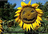 My love for sunflowers (Wall Calendar 2019 DIN A3 Landscape) - Produktdetailbild 9