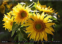 My love for sunflowers (Wall Calendar 2019 DIN A3 Landscape) - Produktdetailbild 1