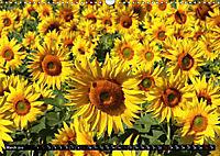 My love for sunflowers (Wall Calendar 2019 DIN A3 Landscape) - Produktdetailbild 3
