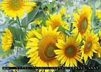 My love for sunflowers (Wall Calendar 2019 DIN A3 Landscape) - Produktdetailbild 7