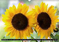 My love for sunflowers (Wall Calendar 2019 DIN A3 Landscape) - Produktdetailbild 12