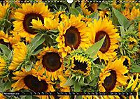 My love for sunflowers (Wall Calendar 2019 DIN A3 Landscape) - Produktdetailbild 11