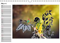 My Parrots (Wall Calendar 2019 DIN A4 Landscape) - Produktdetailbild 5