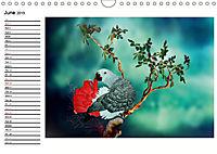 My Parrots (Wall Calendar 2019 DIN A4 Landscape) - Produktdetailbild 6