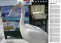 MYKONOS - faszinierende Facetten (Tischkalender 2019 DIN A5 quer) - Produktdetailbild 1