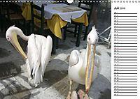 MYKONOS - faszinierende Facetten (Wandkalender 2019 DIN A3 quer) - Produktdetailbild 7