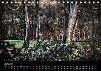 Mystische Wälder (Tischkalender 2019 DIN A5 quer) - Produktdetailbild 6