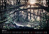 Mystische Wälder (Tischkalender 2019 DIN A5 quer) - Produktdetailbild 4