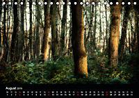 Mystische Wälder (Tischkalender 2019 DIN A5 quer) - Produktdetailbild 8