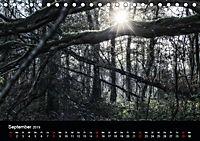 Mystische Wälder (Tischkalender 2019 DIN A5 quer) - Produktdetailbild 9