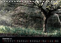 Mystische Wälder (Tischkalender 2019 DIN A5 quer) - Produktdetailbild 12