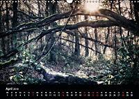 Mystische Wälder (Wandkalender 2019 DIN A3 quer) - Produktdetailbild 4