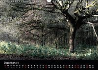 Mystische Wälder (Wandkalender 2019 DIN A3 quer) - Produktdetailbild 12