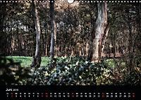 Mystische Wälder (Wandkalender 2019 DIN A3 quer) - Produktdetailbild 11