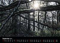 Mystische Wälder (Wandkalender 2019 DIN A3 quer) - Produktdetailbild 9