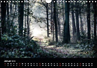 Mystische Wälder (Wandkalender 2019 DIN A4 quer) - Produktdetailbild 3