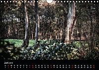 Mystische Wälder (Wandkalender 2019 DIN A4 quer) - Produktdetailbild 12