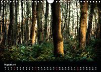 Mystische Wälder (Wandkalender 2019 DIN A4 quer) - Produktdetailbild 4