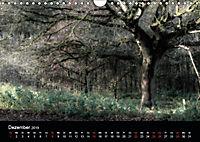 Mystische Wälder (Wandkalender 2019 DIN A4 quer) - Produktdetailbild 6