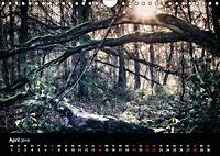 Mystische Wälder (Wandkalender 2019 DIN A4 quer) - Produktdetailbild 9