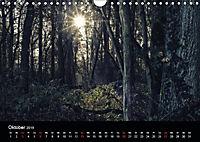 Mystische Wälder (Wandkalender 2019 DIN A4 quer) - Produktdetailbild 5