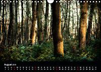 Mystische Wälder (Wandkalender 2019 DIN A4 quer) - Produktdetailbild 8