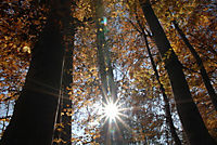 Mythos Wald - Produktdetailbild 5