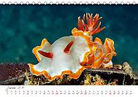 Nacktschnecken, Farbspektakel unter Wasser (Tischkalender 2019 DIN A5 quer) - Produktdetailbild 1