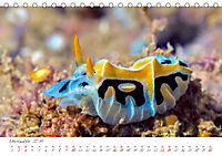 Nacktschnecken, Farbspektakel unter Wasser (Tischkalender 2019 DIN A5 quer) - Produktdetailbild 11