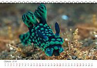Nacktschnecken, Farbspektakel unter Wasser (Tischkalender 2019 DIN A5 quer) - Produktdetailbild 10