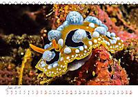 Nacktschnecken, Farbspektakel unter Wasser (Tischkalender 2019 DIN A5 quer) - Produktdetailbild 6