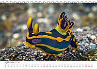 Nacktschnecken, Farbspektakel unter Wasser (Tischkalender 2019 DIN A5 quer) - Produktdetailbild 9