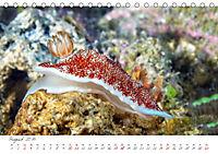 Nacktschnecken, Farbspektakel unter Wasser (Tischkalender 2019 DIN A5 quer) - Produktdetailbild 8