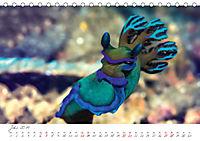 Nacktschnecken, Farbspektakel unter Wasser (Tischkalender 2019 DIN A5 quer) - Produktdetailbild 7