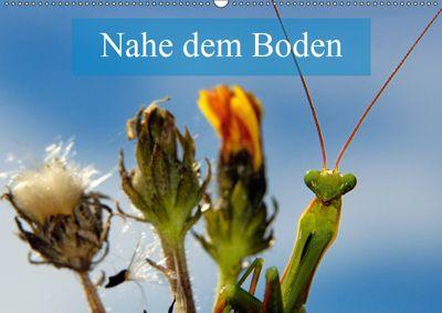 Nahe dem BodenAT-Version (Wandkalender 2019 DIN A2 quer), Alain Gaymard