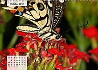 Nahe dem BodenAT-Version (Wandkalender 2019 DIN A2 quer) - Produktdetailbild 10