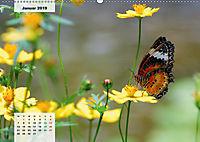 Nahe dem BodenAT-Version (Wandkalender 2019 DIN A2 quer) - Produktdetailbild 1