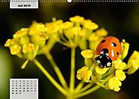 Nahe dem BodenAT-Version (Wandkalender 2019 DIN A2 quer) - Produktdetailbild 7