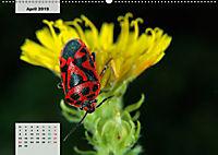 Nahe dem BodenAT-Version (Wandkalender 2019 DIN A2 quer) - Produktdetailbild 4