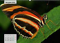 Nahe dem BodenAT-Version (Wandkalender 2019 DIN A2 quer) - Produktdetailbild 11