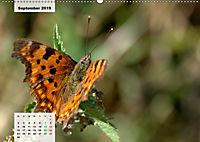 Nahe dem BodenAT-Version (Wandkalender 2019 DIN A2 quer) - Produktdetailbild 9