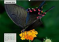 Nahe dem BodenAT-Version (Wandkalender 2019 DIN A2 quer) - Produktdetailbild 12