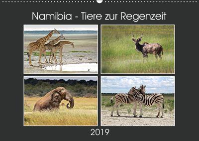 Namibia - Tiere zur Regenzeit 2019 (Wandkalender 2019 DIN A2 quer), © Mirko Weigt