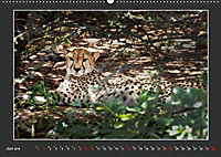 Namibia - Tiere zur Regenzeit 2019 (Wandkalender 2019 DIN A2 quer) - Produktdetailbild 6